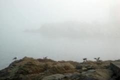 nebbia (5)