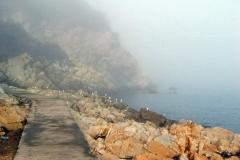 nebbia (6)