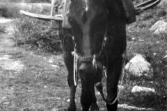 orazio (12)